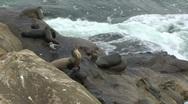 Multiple Seals on Rocks Next to Ocean Stock Footage