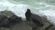 Stock Video Footage of Seal on Rocks Next to Ocean