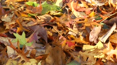 HS leaves.mp4 Stock Footage