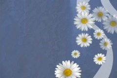 Daisy Intro Stock Footage