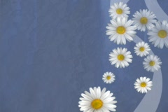 Daisys On Blue Stock Footage