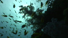 Coral reef soft coral - Back light Stock Footage