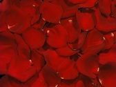 Stock Video Footage of Rose Petals Wipe