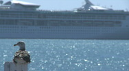 Stock Video Footage of seagull watches a cruise liner passing