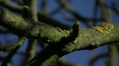 Branches 01 Stock Footage