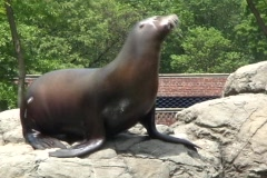 Sea lion 9  Stock Footage