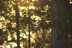 Leaves rustle in the forest. Stock Footage