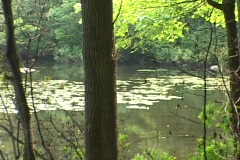 A small lake sits in a forest. Stock Footage