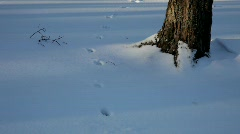 Animal tracks in the snow in a forest Stock Footage