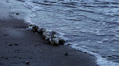 Ice is growing on algae lying on a beach in winter Stock Footage