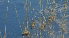 Grasses dancing in the winter wind (nfv209-32) - stock footage
