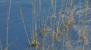 Grasses dancing in the winter wind (nfv209-32) Stock Footage