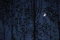 A crescent moon shines behind a grove of trees. Stock Footage