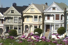 Flowers wave in the breeze near a row of Victorian style houses in San Stock Footage