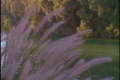 The Jordan River flows near some purple reeds. Stock Footage