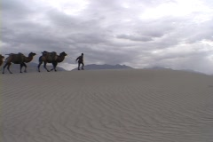 A man leads camels across the desert. Stock Footage