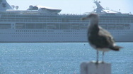 Rack focus from liner to sea gull Stock Footage