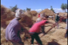 African farmers harvest hay. - stock footage