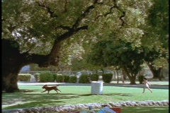 A family picnics under a tree. Stock Footage