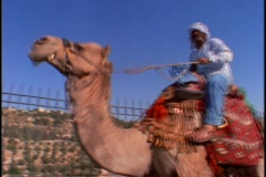 A man and his son ride a camel. Stock Footage