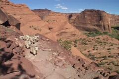 Sheep walk down a steep canyon trail. Stock Footage