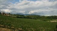 Stock Video Footage of Vineyard panorama