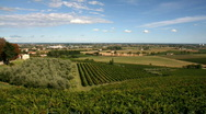 Stock Video Footage of Vineyard panorama