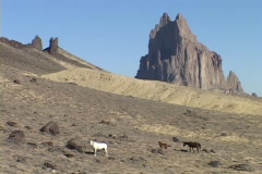 Stock Video Footage of Wild horses roam on the desert in front of the Shiprock monolith in New Mexico.