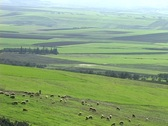 Sheep graze on the rolling hills of an Irish pasture. Stock Footage
