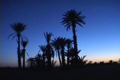 Palm trees stand as silhouettes against a tropical golden-hour. Stock Footage