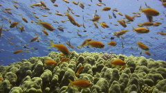 Coral reef marine life Stock Footage