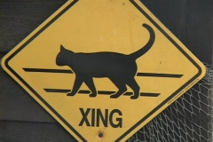 A yellow cat crossing sign hangs on a fence. Stock Footage