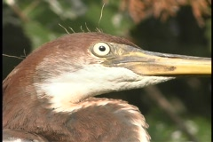 A brown and white bird with a long beak moves its head abruptly as it surveys Stock Footage
