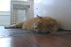 A orange and white striped cat sleeps on a tile floor. Stock Footage