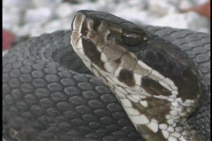 A snake sits motionless with its head pointed into the air. Stock Footage