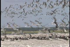 Seagulls land on the beach. Stock Footage