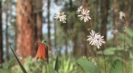Pacific Northwest Wildflowers Stock Footage