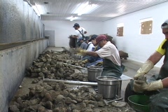 Oyster shuckers work in a factory along the east coast of the United States. Stock Footage