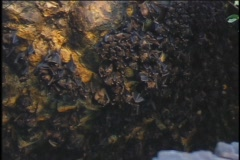 Bats hang from a cave ceiling in Bali, Indonesia. Stock Footage