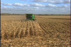 A farmer drives a combine machine through several rows of corn. Stock Footage