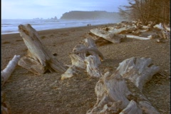 Driftwood lines a beach along the Oregon coast. Stock Footage