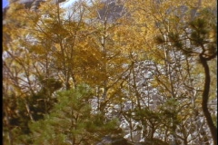 George Washington's head appears above autumn leaves at Mount Rushmore. Stock Footage