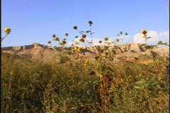 Sandstone cliffs rise beyond yellow wildflowers. Stock Footage