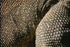 Dry scales cover reptiles. Stock Footage