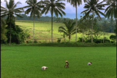 Farmers harvest a rice paddy in Bali, Indonesia. Stock Footage