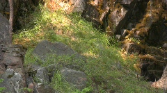 Black bear cub twins Stock Footage