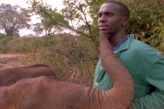 A baby elephant nuzzles its trainer. Stock Footage