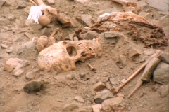 Medium-shot of human bones lying in an archeological site. Stock Footage