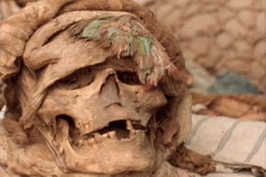 Panning-shot of a human skull found at an archaeological site. - stock footage