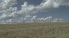 wheatfield - stock footage